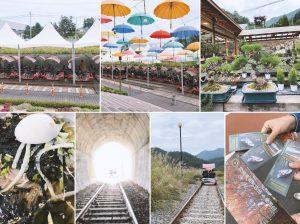 首爾近郊一日遊 | 南怡島、江村鐵道自行車、晨靜樹木園